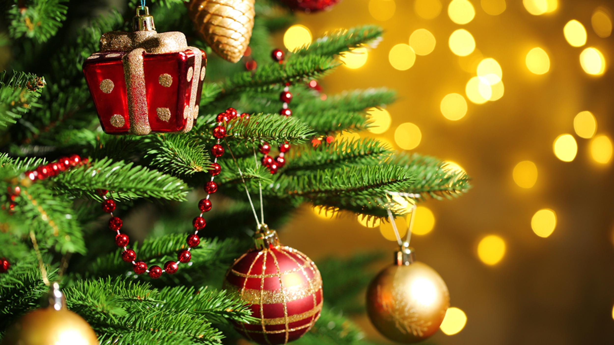 Придбати ялинку в Івано-Франківську: скільки коштує головний новорічний атрибут? (відеосюжет)