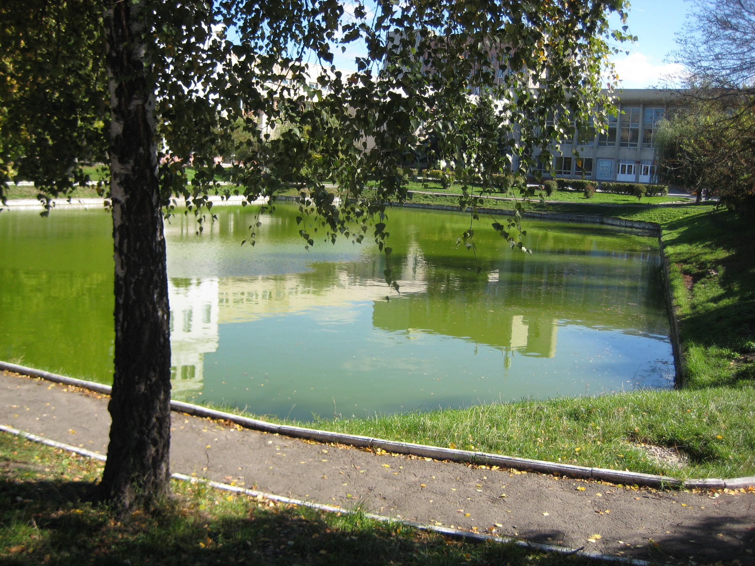 Став в подвір'ї Ветеринарного університету, який є залишком Вороблячого ставу