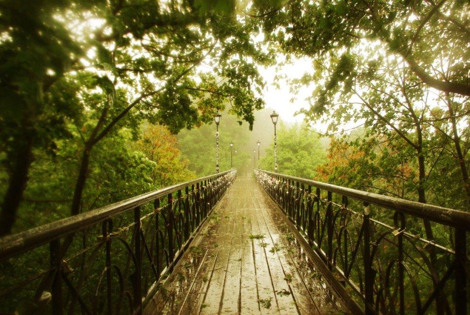 Маріїнський парк - фото 281253