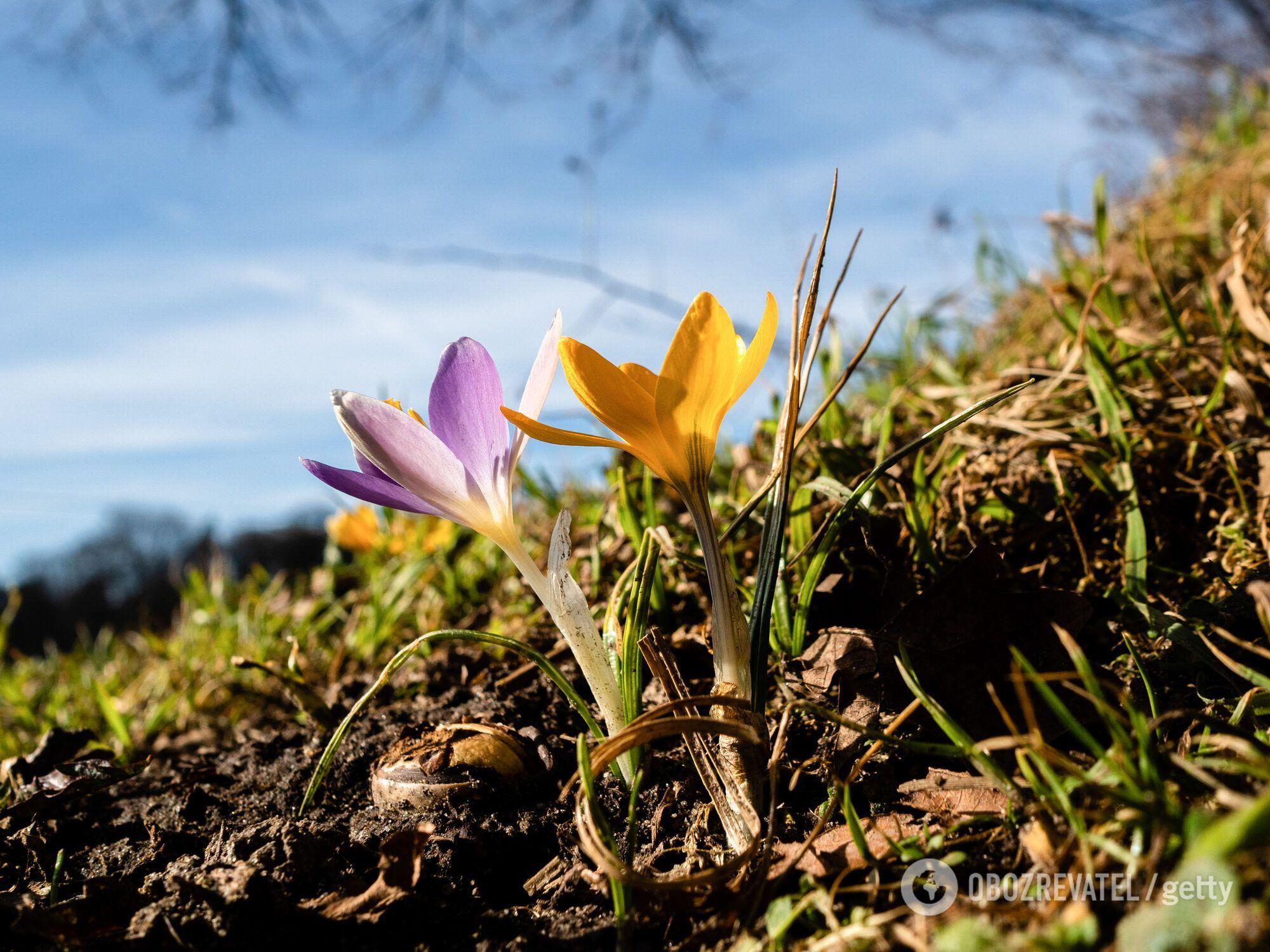Справжня весна в Україну прийде нескоро.