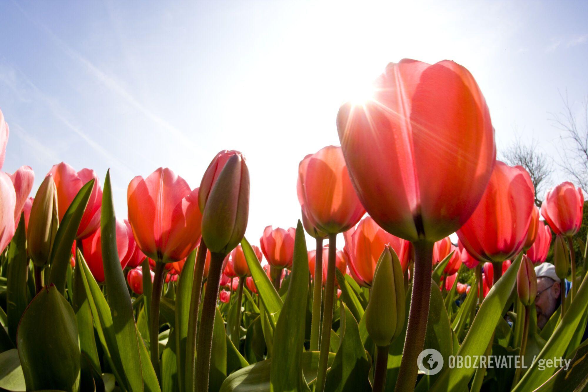 Потепління прийде в середині квітня.